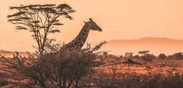 В Африку гулять: туризм, сафари, посещение племён