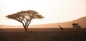 Акуна-Матата: 44 необычных развлечения в Танзании